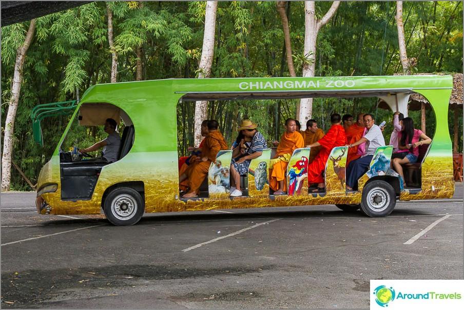 Bussit liikkua eläintarhassa