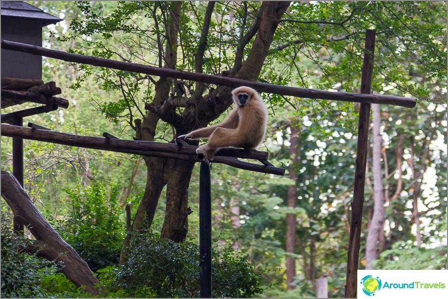 Toisella puolella apinat istuvat