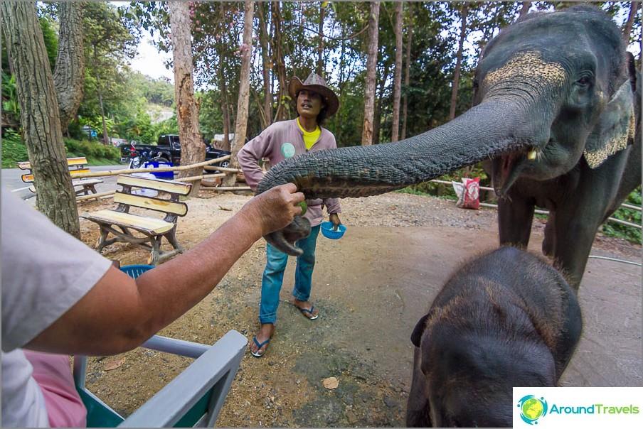 Toisaalta voit ruokkia norsuja