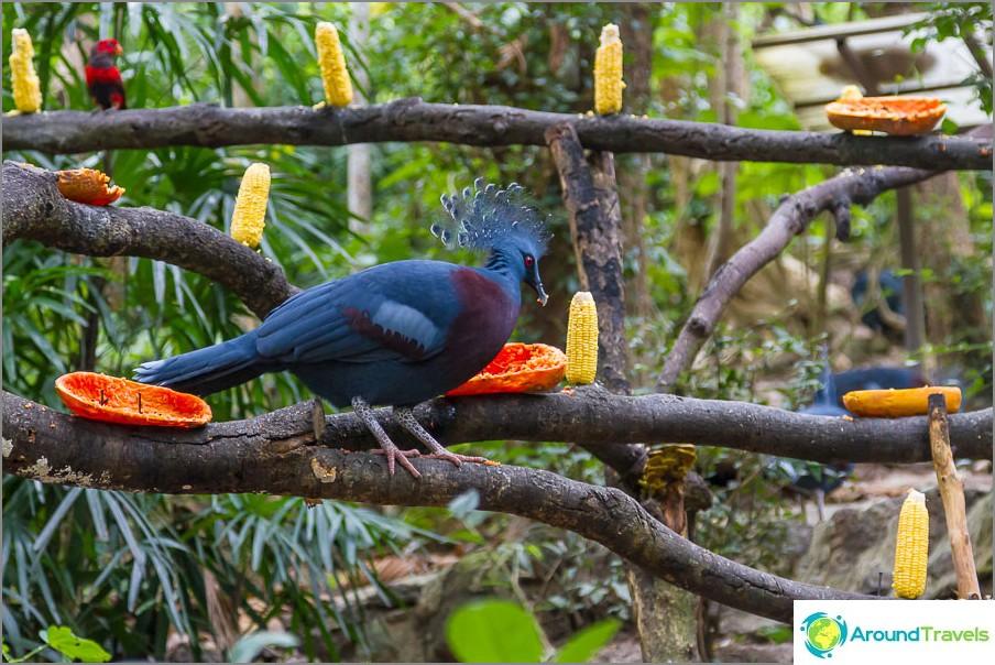 Joku sininen lintu suihkutti minua, ajattelin, että otan pois papaijan