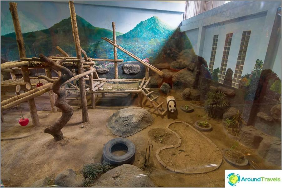 Ensimmäinen pandailla varustettu paviljonki, täällä he ovat lasin takana