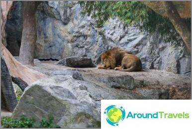 Nukkuva leijona