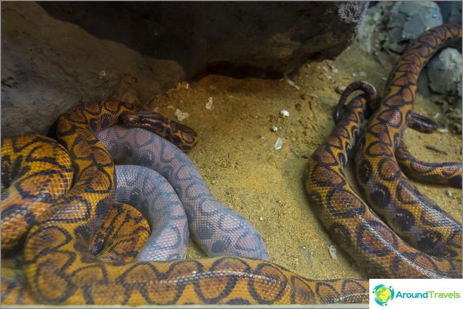 Käärmeessä on selvästi jotain vikaa