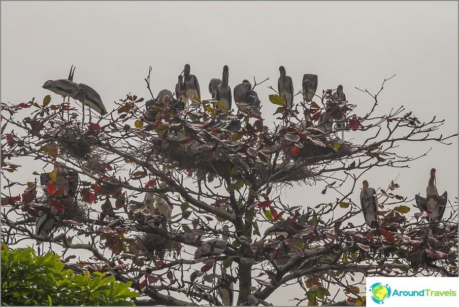Jotkut isot linnut istuvat puussa