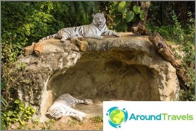 Tiikerit lähestymistavassa