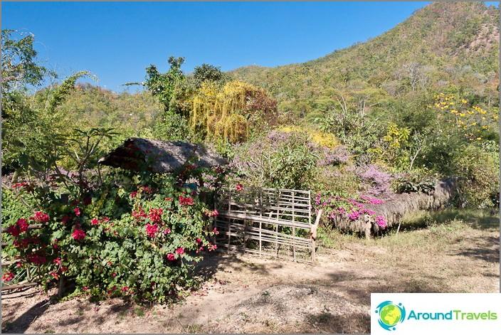 Около цветя, пълзящи растения и друга растителност