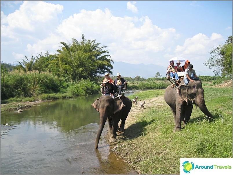 Joten ratsastaa norsu satulan istuimella