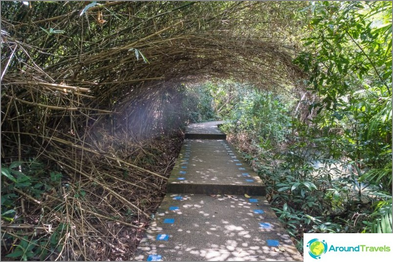 Tai Natural Trail