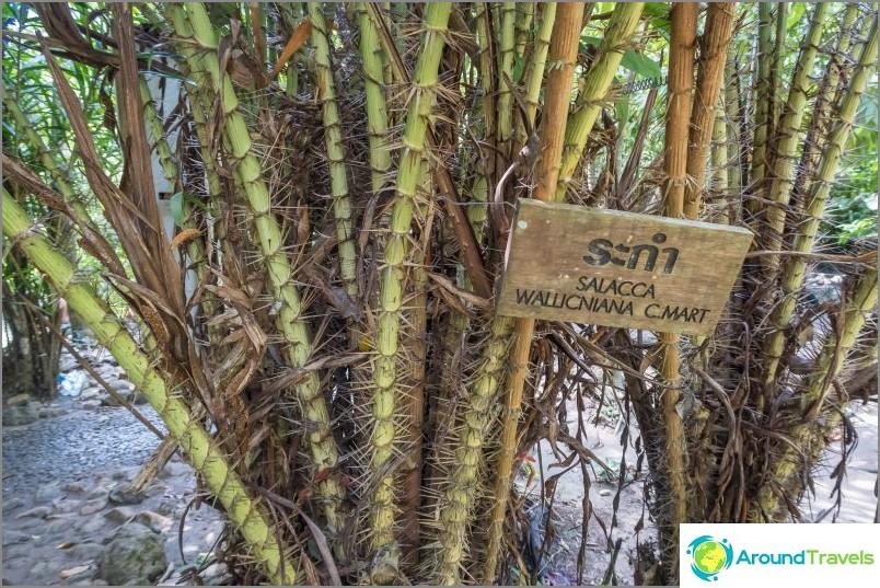 Hyvin uhkaava kasvillisuus tietyissä paikoissa