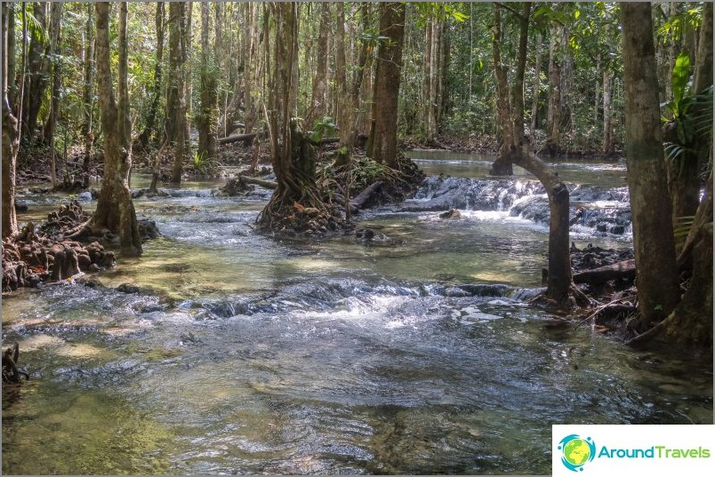 Kasvaako metsä joessa