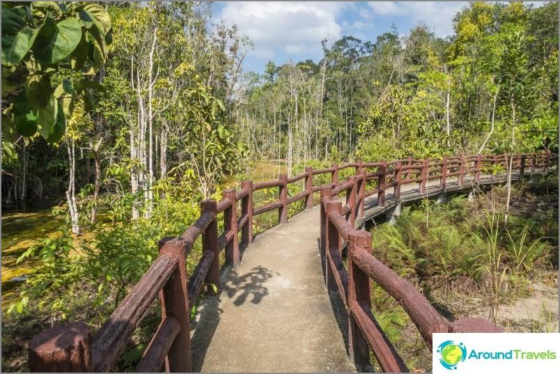 Sillat kulkevat sekä puiden että avointen tilojen läpi