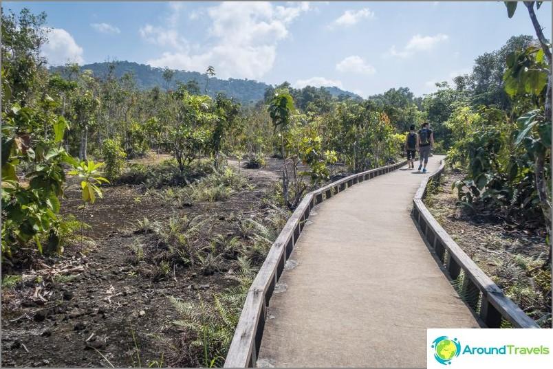 Emerald-järven jälkeen polku alkaa avoimessa maastossa.