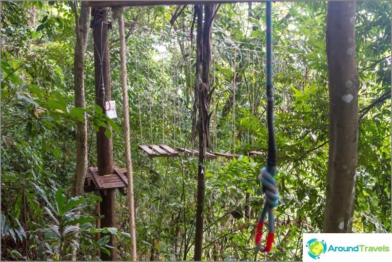 Rope Park Tree -seikkailu
