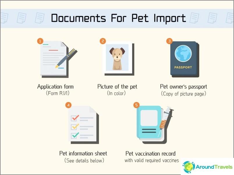 Thaimaassa koiran tai kissan kanssa - eläinten kuljetus ulkomaille