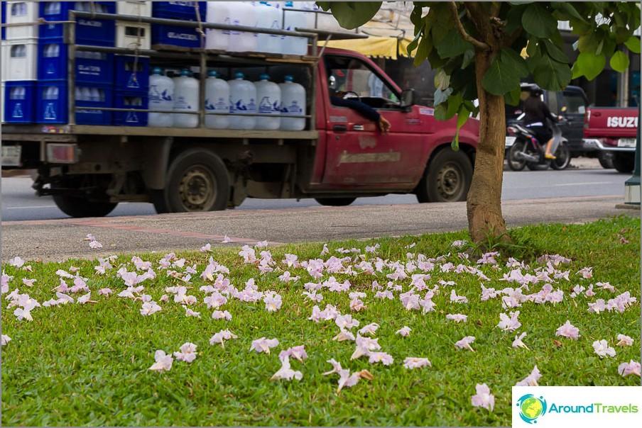 Разходки в град Чианг Май
