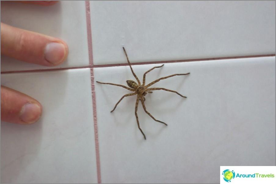 Hämähäkkejä voi päästä taloon