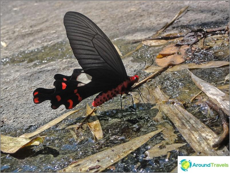 Kaikenlaisia perhosia löytyy kaikkialta.