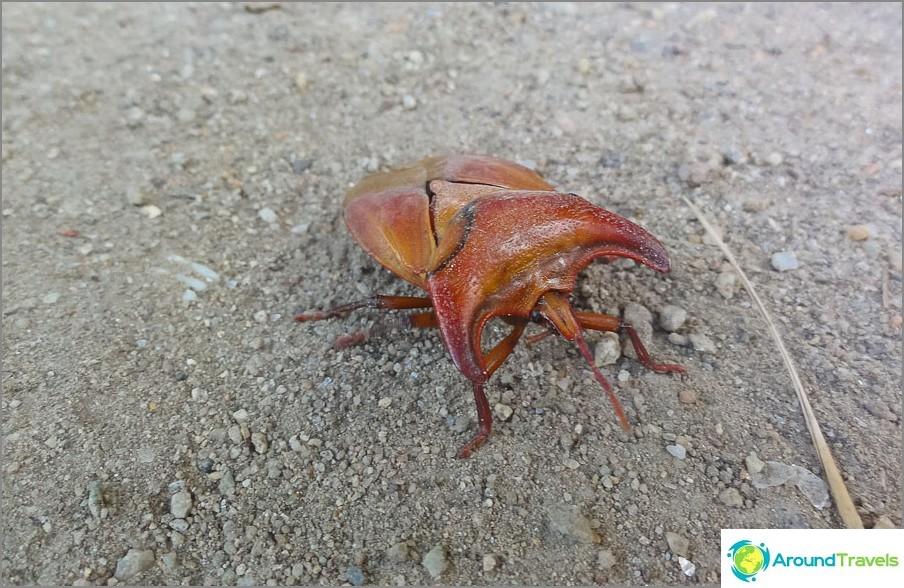 Jotkut kovakuoriaiset tapasivat viidakossa
