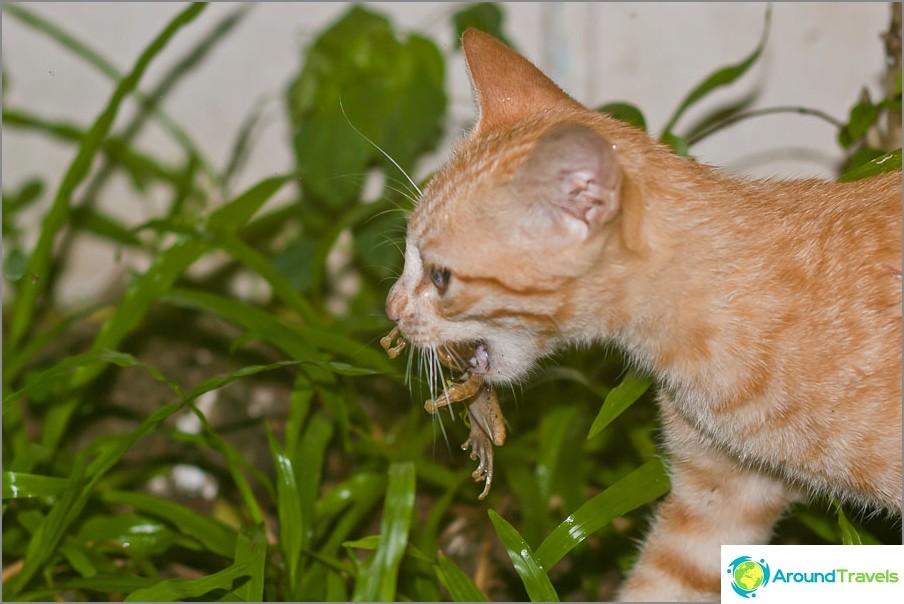 Vähintään kissat kissat voivat tulla taloon kiintymystä ja ruokaa varten.