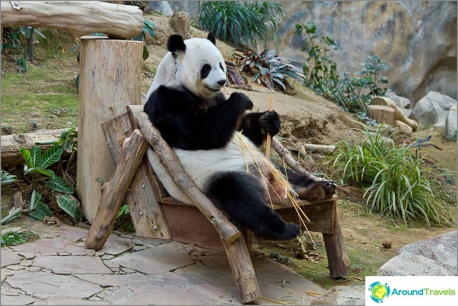 Pandat asuvat vain eläintarhoissa eivätkä kävele kaduilla