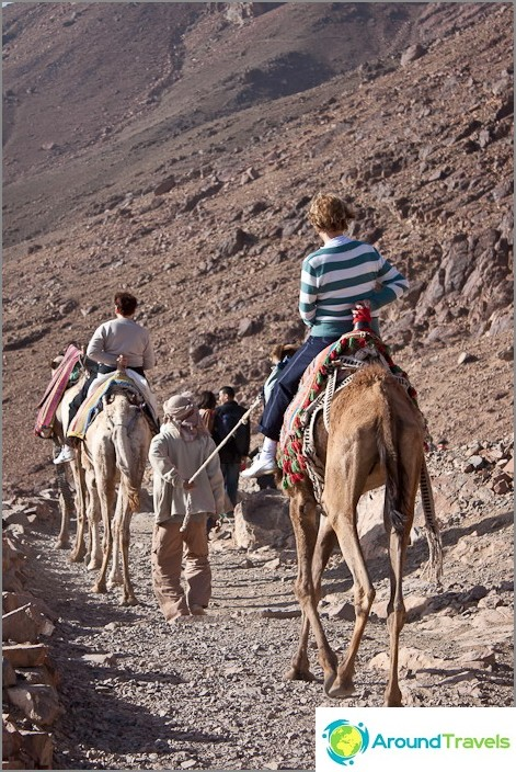 Mooseksen vuori. Kamelin kulkue.