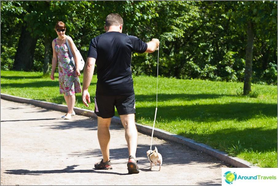 Brutaali mies kävelee hamsterin koiran kanssa