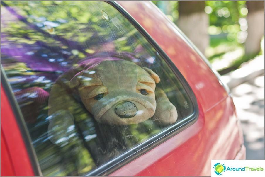 Hyvin surullinen pehmokoira jonkun autossa