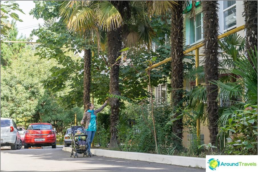 Дворовите пътища са много тесни, но за това растат палми