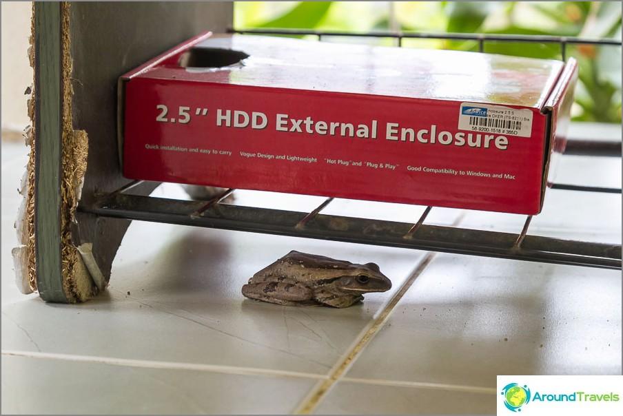 Toad asuu kenkähyllyn laatikossa