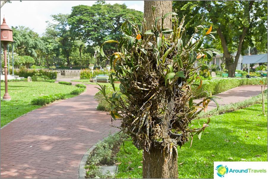 Kasvit loiset kasvavat puutarhassa