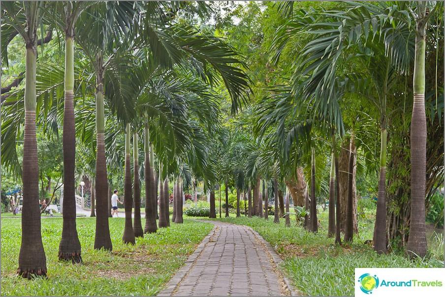Palm Alley Lumpini Park