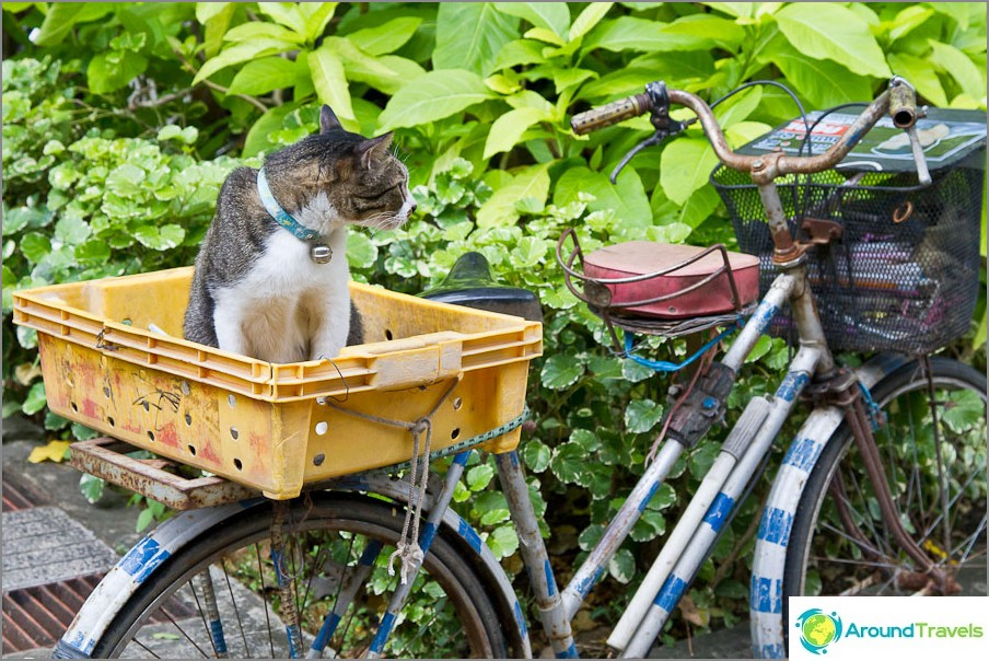 Kissat odottavat omistajiaan