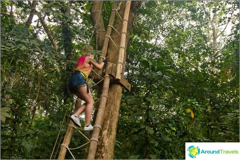 Ensin täytyy kiivetä tästä korkeasta puusta