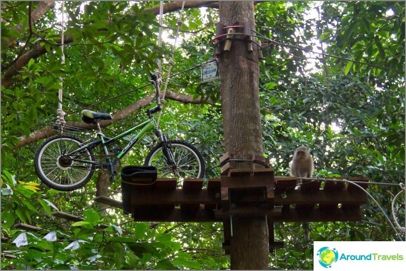 Apinat Tree Top -seikkailupuistossa