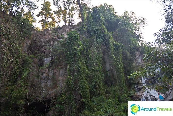 Kasvillisuus Doi Suthepin kansallispuistossa