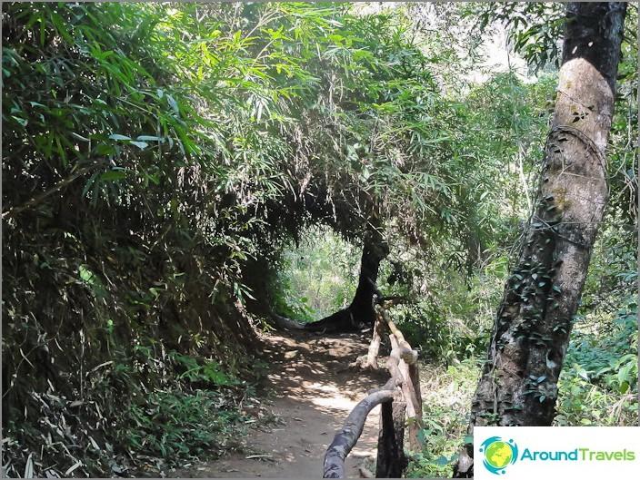Kävelytiet Doi Suthep -puistossa