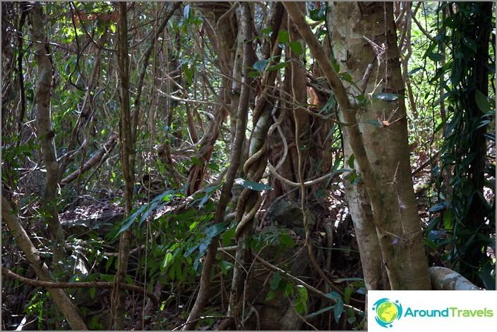 Viidakon ympärillä