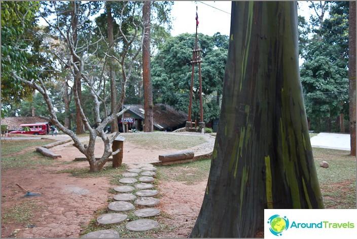 Puiston alue