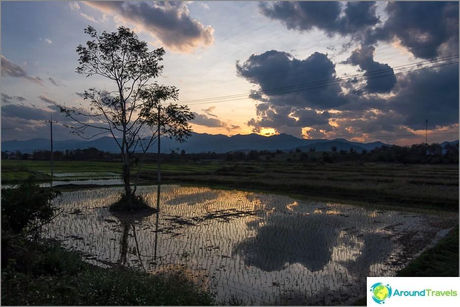Riisipellon auringonlasku päivän lopussa