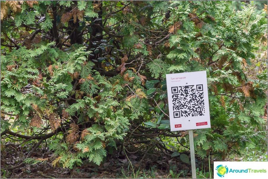 Някои растения не само са подписани, но и имат QR код