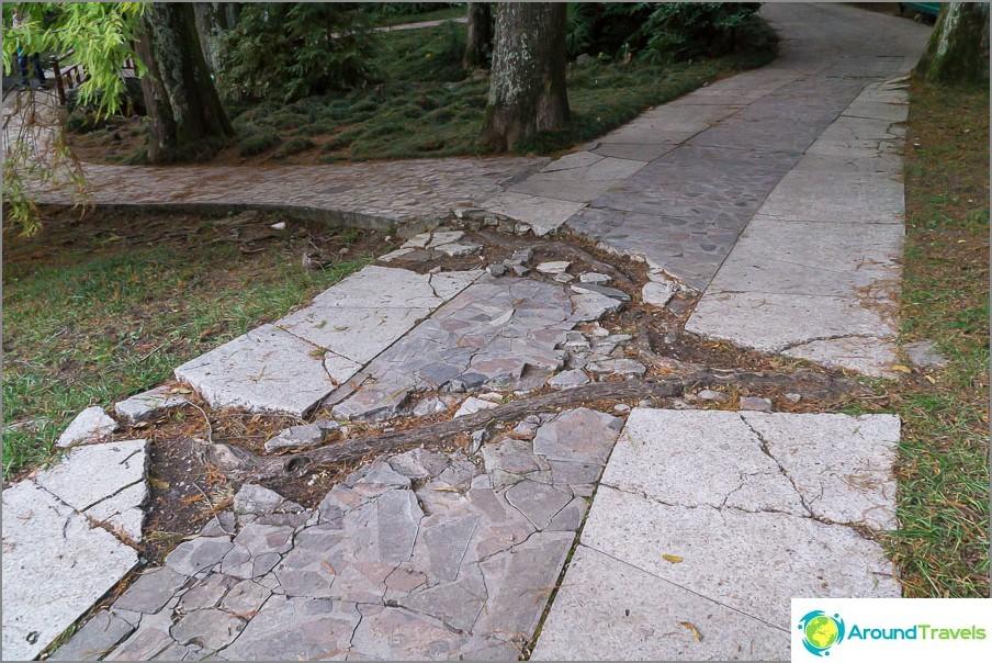 Корените на дървото пречупиха пътя