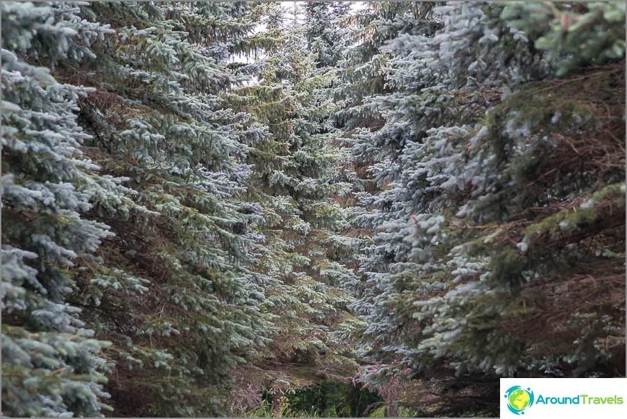 Elää sellaisen metsän ympäröimänä