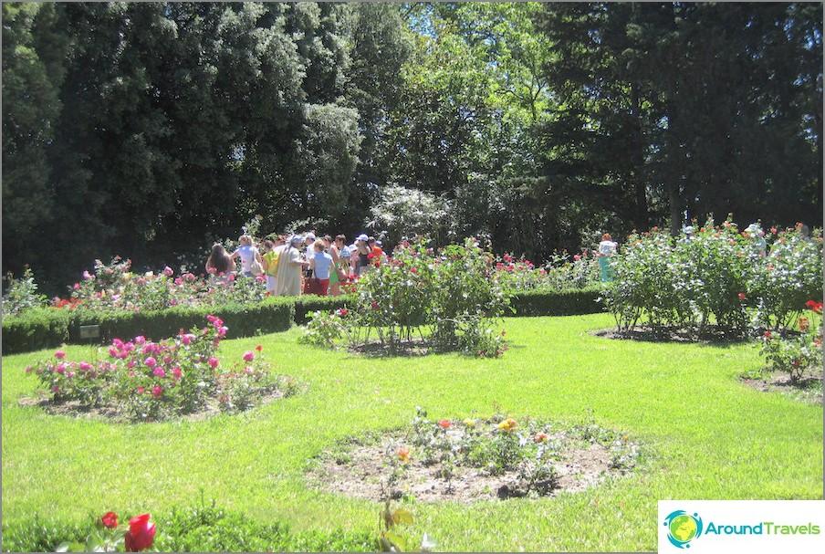 Nikitskyn kasvitieteellinen puutarha