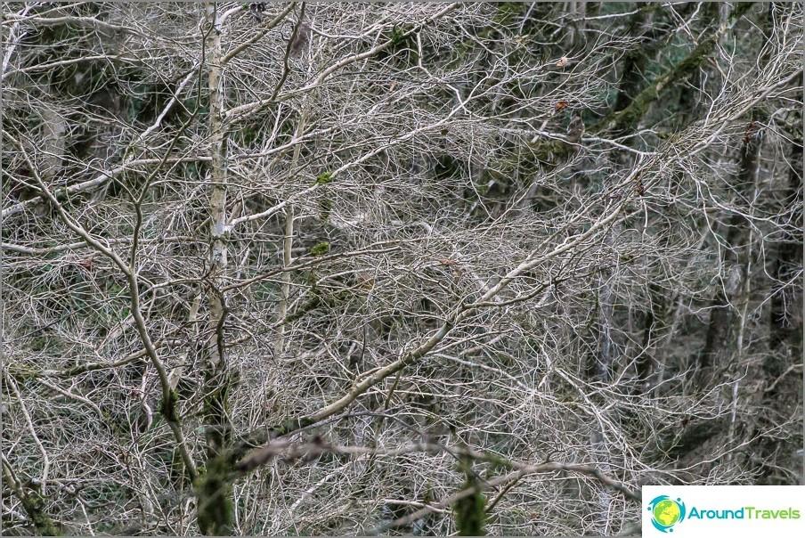 Kuollut puksipuu, jäädytetty ikuisena talvena