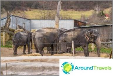 Prahan eläintarha - 3 tuntia hauskaa talvella ja kesällä, kaikki tiedot