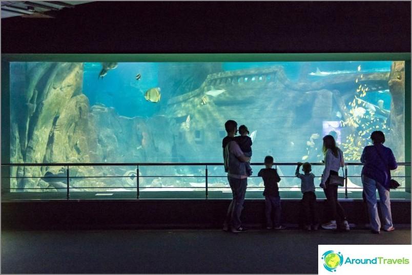 Akvaario Adlerissä