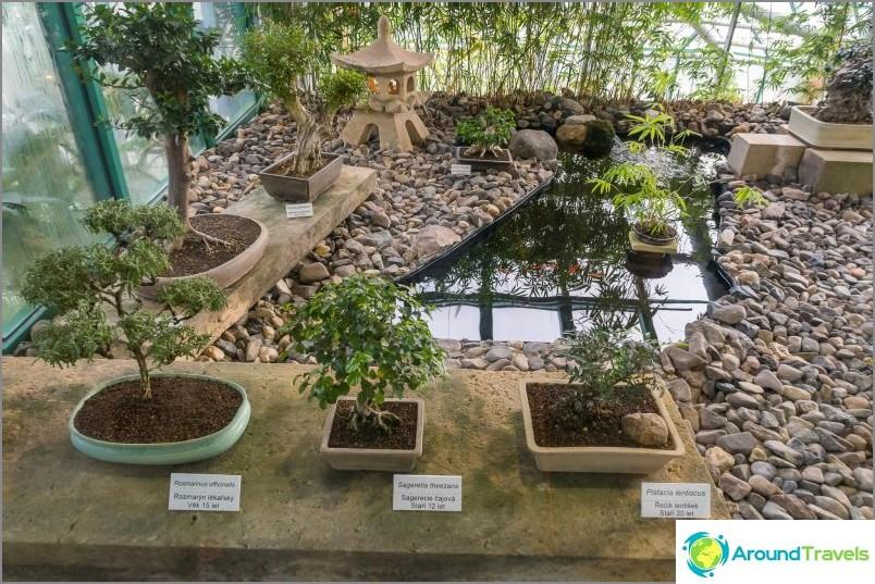 Liberecin kasvitieteellinen puutarha - kaiken kauden kauneus