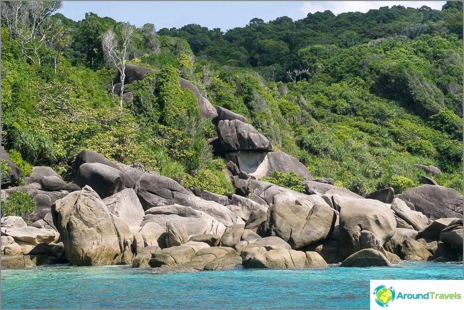 Noin rehevä trooppinen luonto