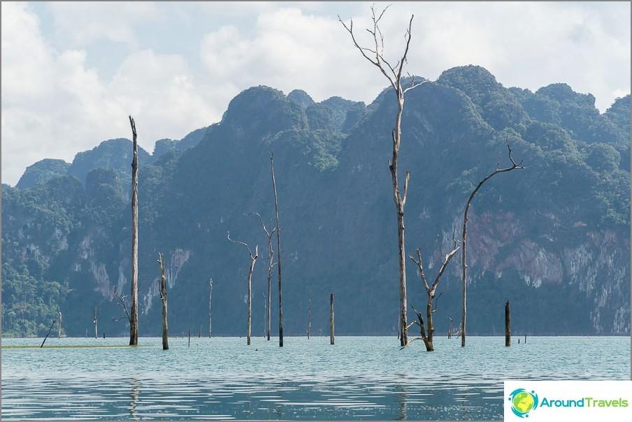 Minusta on hämmästyttävää, kuinka puita on säilytetty 30 vuoden ajan.