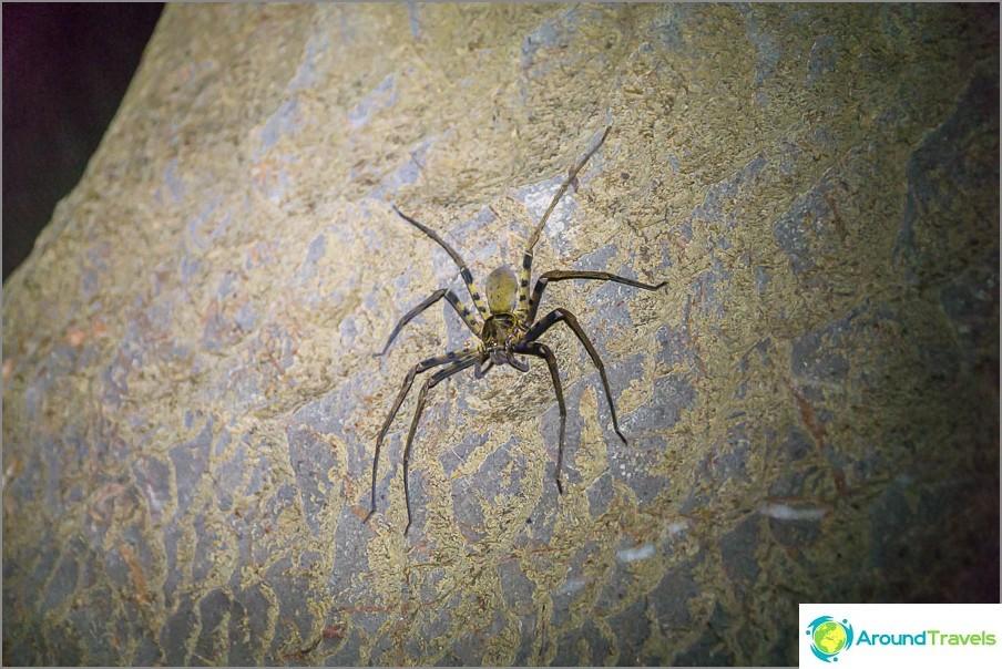 Seinällä voit tavata hämähäkin